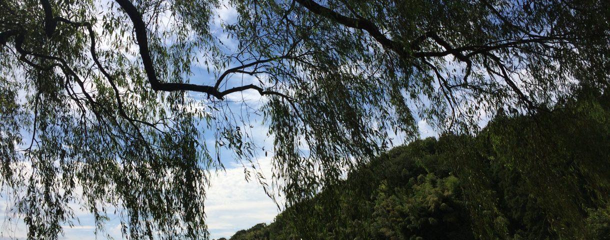 栃木放浪記其の二: 那須岳と遊行柳に癒される。