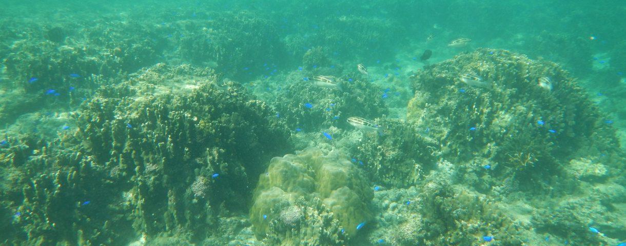沖縄放浪記其の一: 旅人が集う地、石垣島。DAY1&DAY2(前編)