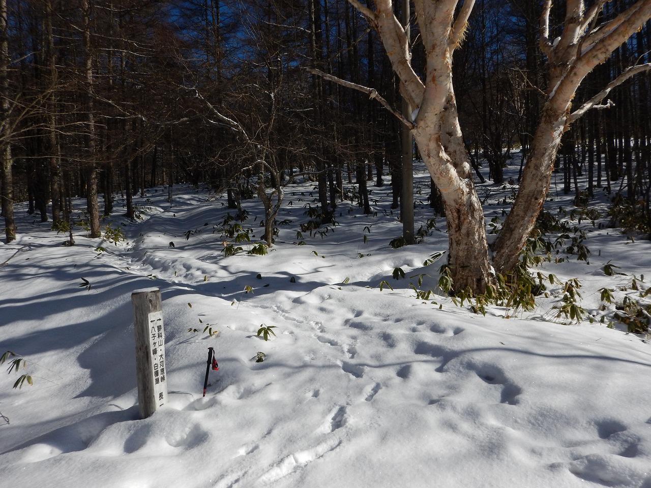 1月の登山口。
