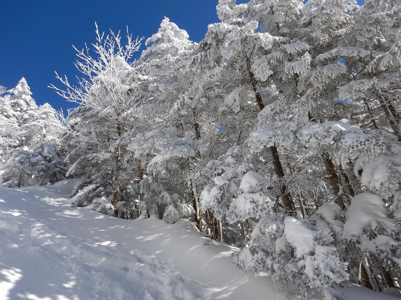 蓼科山、登山道風景。