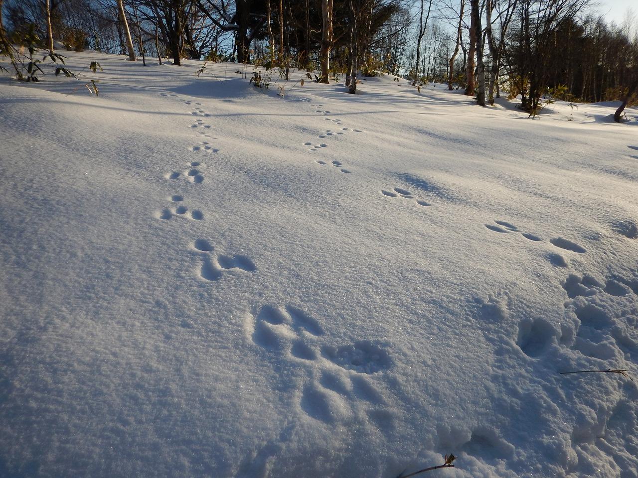 動物の足跡。
