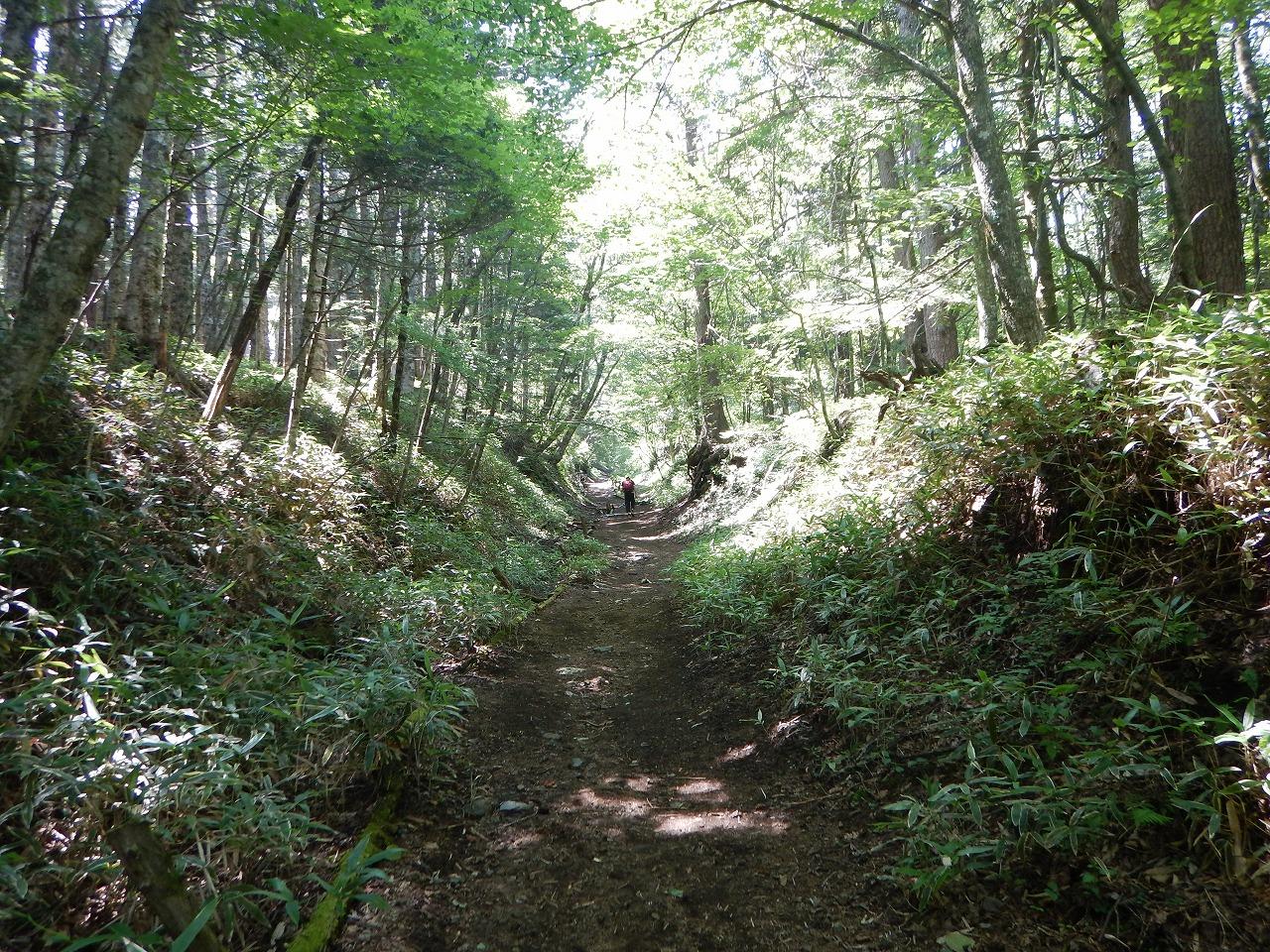 いきなり登山道。