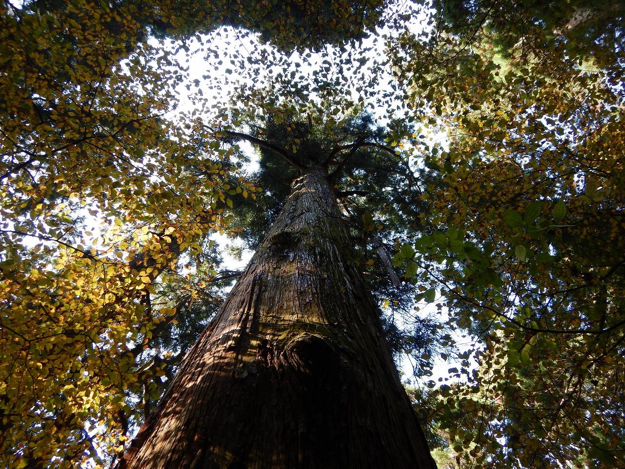 大樹を見上げて