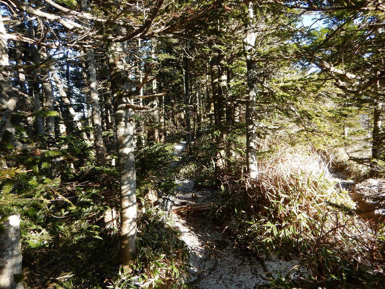 樹林帯を進む。