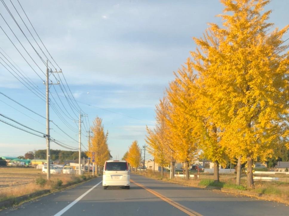紅葉並木道