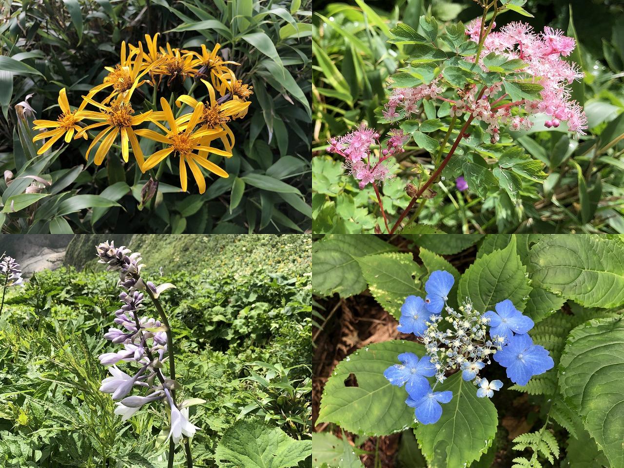 雨飾山に咲く花たち