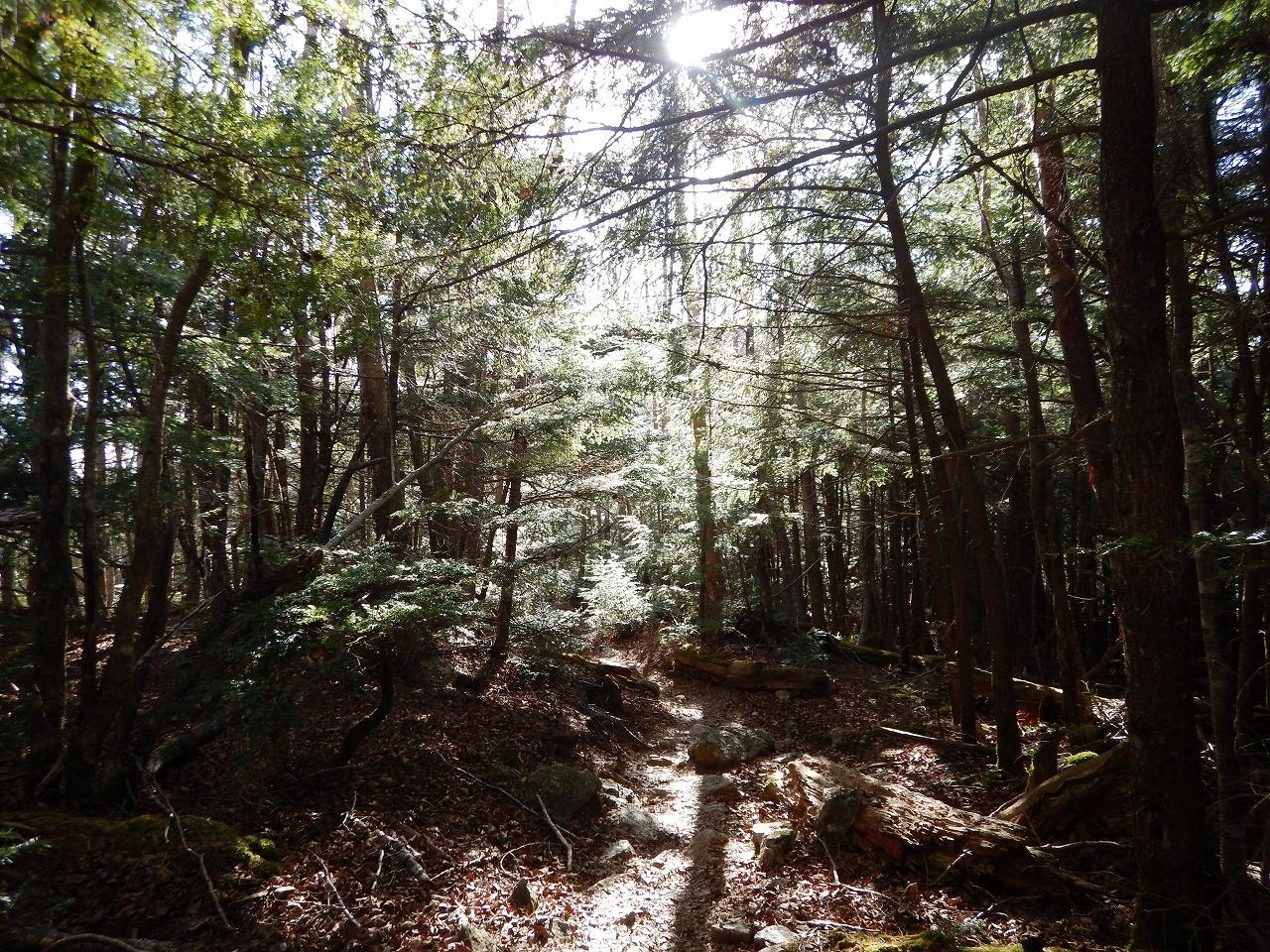 森林ウォーク!