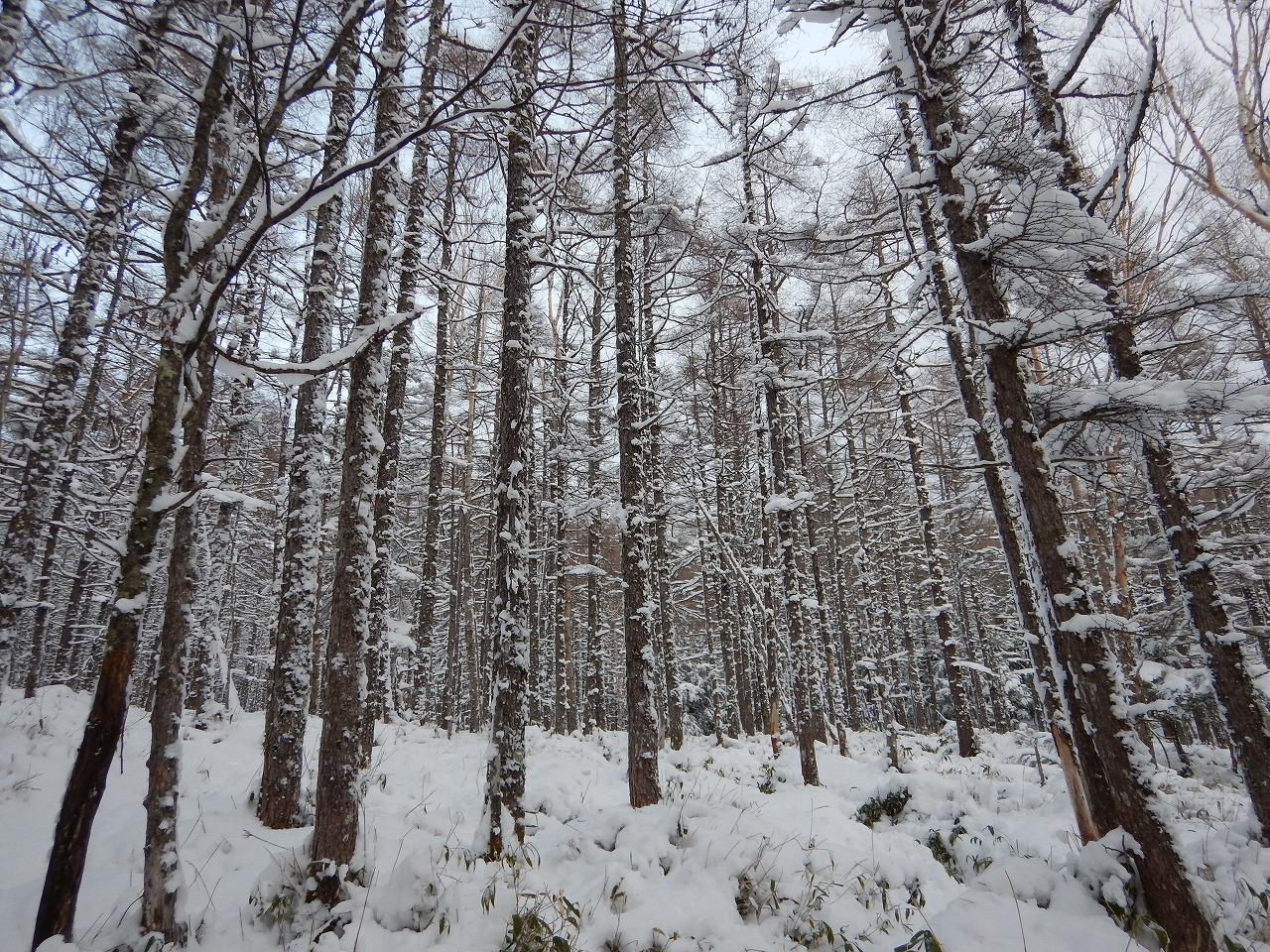 雪にまみれた木々