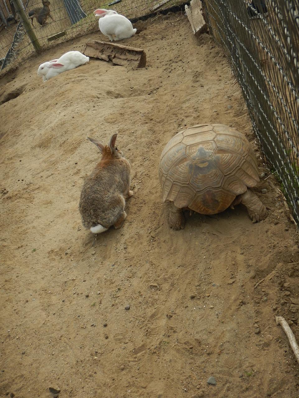ウサギと亀