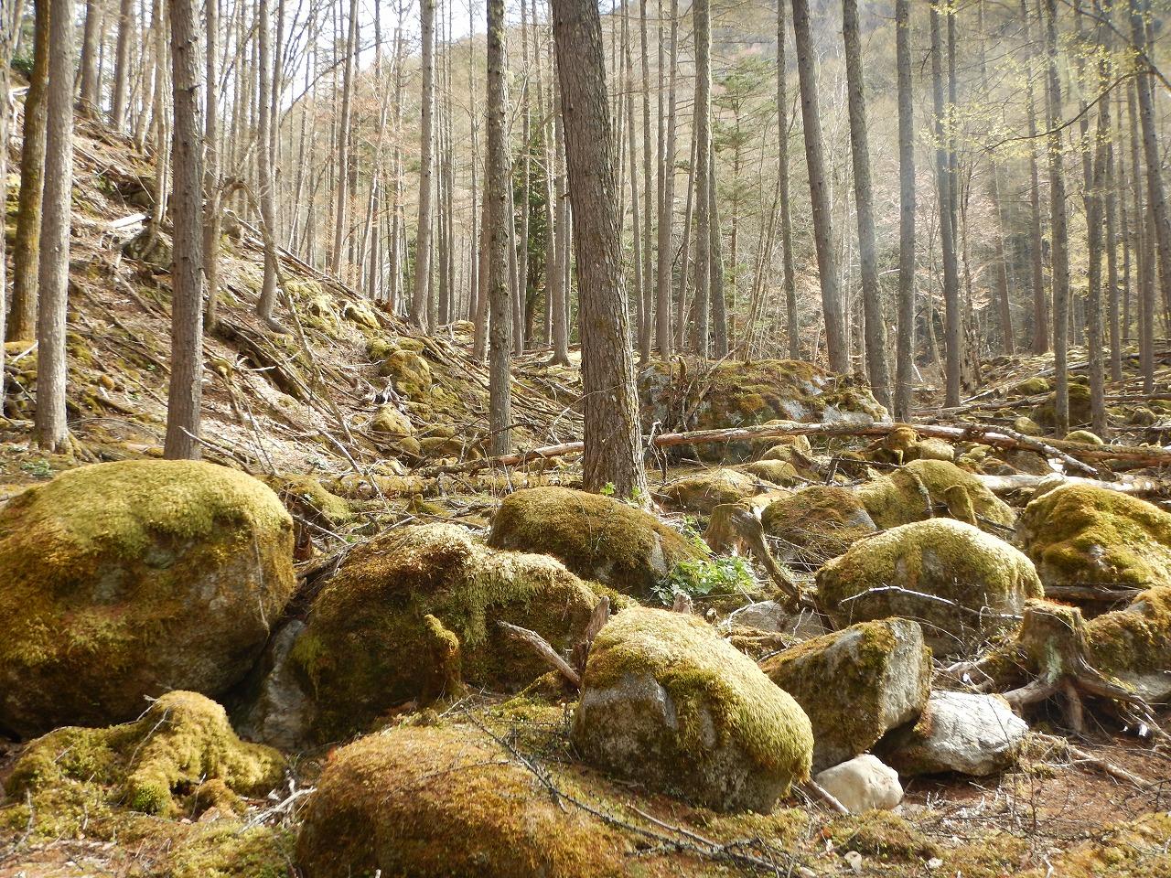 苔むした、そこは森